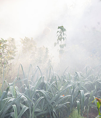 Plants in garden in morning fog - p312m1131306f by Lena Granefelt