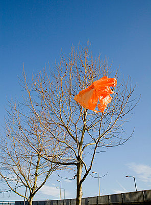 Orange carrier bag in tree - p4297265f by Ashley Jouhar