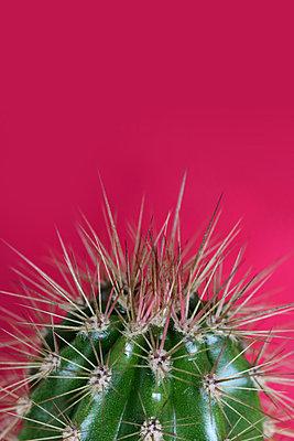 Kaktus   - p450m2161111 von Hanka Steidle