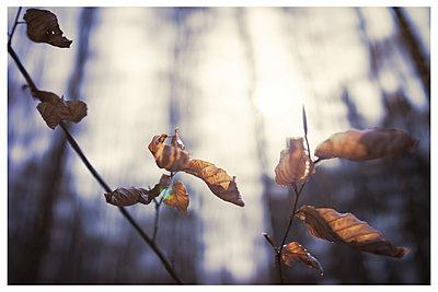 Wald und Laubblätter im Gegenlicht - p1564m2294938 von wpsteinheisser
