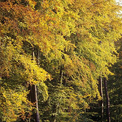 Laubbäume  - p2200056 von Kai Jabs