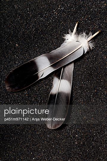 Feather - p451m971142 by Anja Weber-Decker