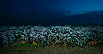 Blue Sprouts - p1132m955265 by Mischa Keijser