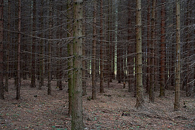 Germany, woods - p2683436 by Rui Camilo