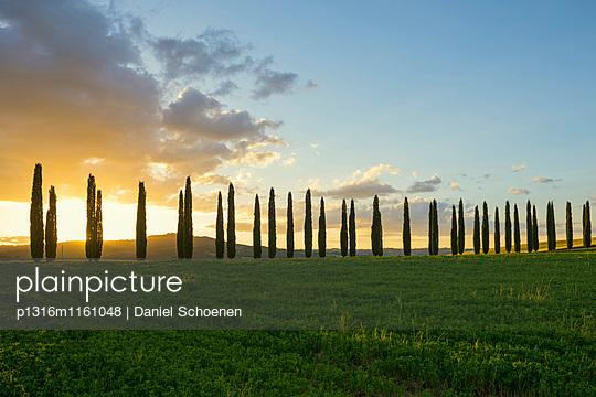 Landschaft bei San Quirico d`Orcia, Val d`Orcia, Provinz Siena, Toskana, Italien, UNESCO Welterbe - p1316m1161048 von Daniel Schoenen