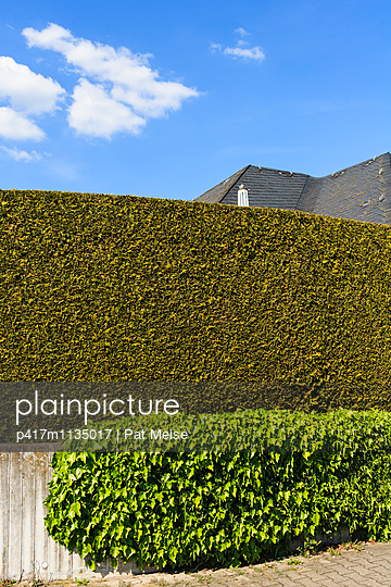 Hedge - p417m1135017 by Pat Meise