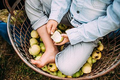 Little boy sits in apple basket - p586m1068298 by Kniel Synnatzschke