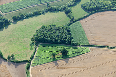 Copse aerial view UK - p1048m1069288 by Mark Wagner