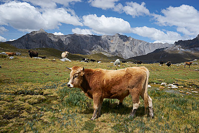 Andes - p1259m1072288 by J.-P. Westermann