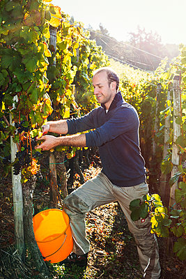 Im Weingebiet - p1271m1539694 von Maurice Kohl