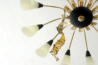 Lampe mit Fliegenfalle - p2320193 von Britta Warnecke