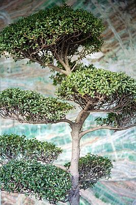 Bonsai, close-up - p1248m2270298 by miguel sobreira