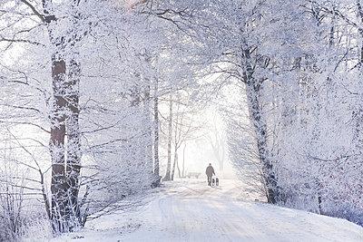 Winterlandschaft - p570m793433 von Elke Röbken