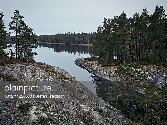 Forest at water - p312m1228838 by Stefan Isaksson