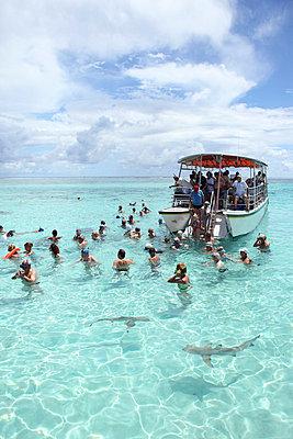 Schwimmende Touristen vor der Küste Polynesiens - p045m727389 von Jasmin Sander