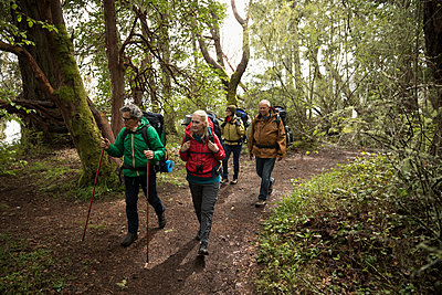 Active senior friend hikers hiking in woods - p1192m2000420 by Hero Images