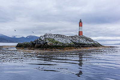 Lighthouse and wild animals - p741m2065653 by Christof Mattes