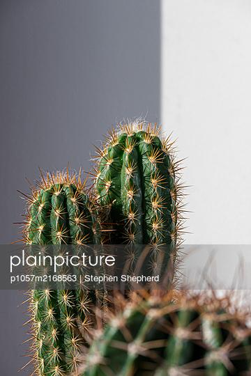 Kaktus - p1057m2168563 von Stephen Shepherd