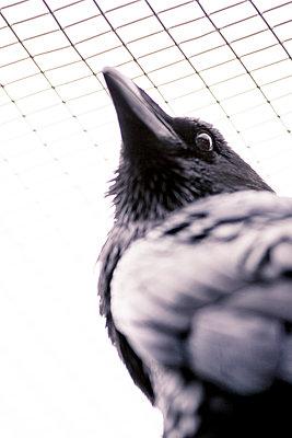 Raven - p1076m948486 by TOBSN