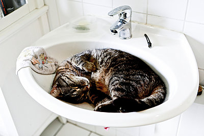 Cat in basin - p1221m1045058 by Frank Lothar Lange