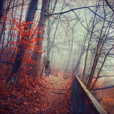 Germany, near Wuppertal, man walking through autumn forest - p300m973734 by Dirk Wüstenhagen