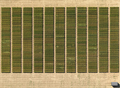 Aerial view of crops in agricultural landscape, Hohenheim, Stuttgart, Baden-Wuerttemberg, Germany - p301m1406249 by Stephan Zirwes