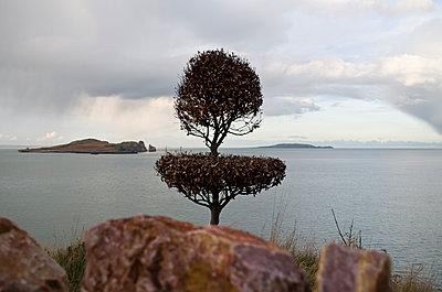 Irische See - p195m1526394 von Sandra Pieroni
