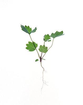 plant - p5671811 by Céline Peiny