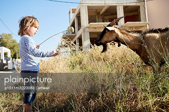 Kleiner Junge und eine Ziege - p1511m2223083 von artwall