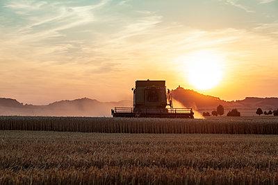Getreideernte in der Abendsonne - p1168m2007766 von Thomas Günther