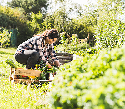 Young woman picking vegetables in community garden - p300m2221301 by Uwe Umstätter