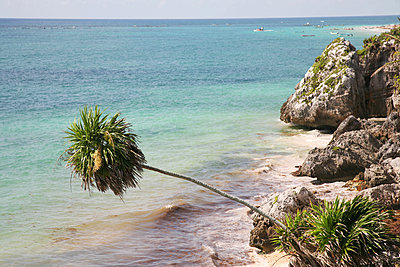 Palm on beach - p375m1563872 by whatapicture