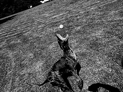 Dog playing ball - p551m1582905 by Kai Peters