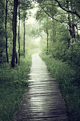 Wooden path - p992m1045232 by Carmen Spitznagel