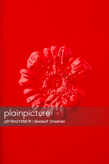 Red painted Gerbera in front of red background - p919m2195678 by Beowulf Sheehan