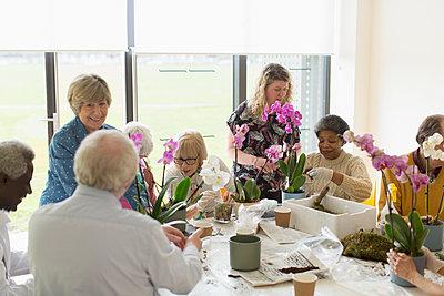 Active seniors enjoying flower arranging class - p1023m2024468 by Martin Barraud