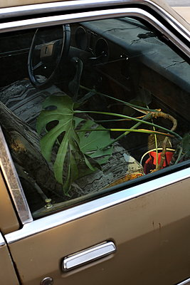 Foliage plant in a car - p1063m1538367 by Ekaterina Vasilyeva