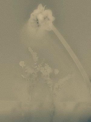 Blurred Flowers - p1484m2158506 by Céline Nieszawer