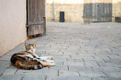 A Cat Lying Down - p1655m2288471 by lindsay basson