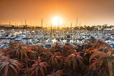 View of Dana Point marina at sunset, California, USA - p343m1569083 by Sean Davey