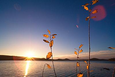 Herbstblätter leuchten golden im Licht der untergehenden Sonne an einem stillen See - p235m2160820 von KuS
