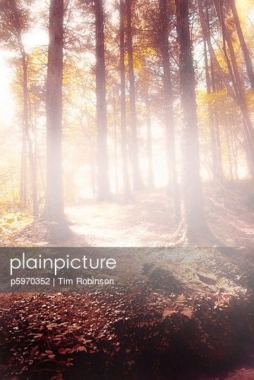 Woodland glade in autumn with evening sunlight - p5970352 by Tim Robinson