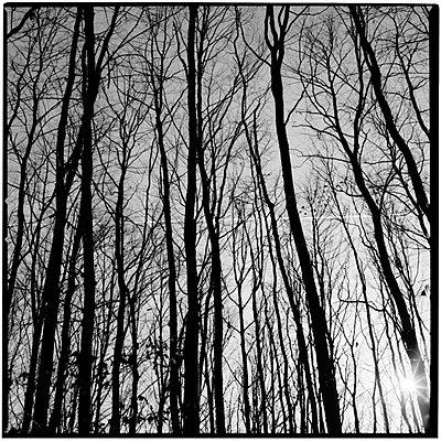 Kahle Bäume im Winter - p9793622 von Muequin