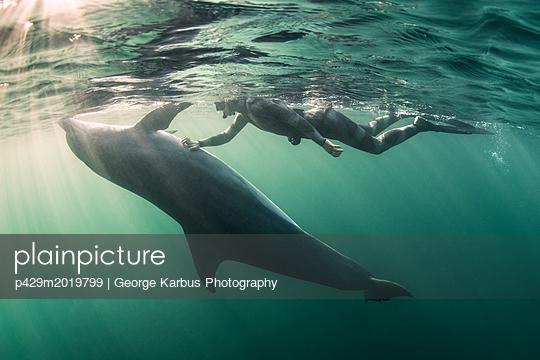 p429m2019799 von George Karbus Photography