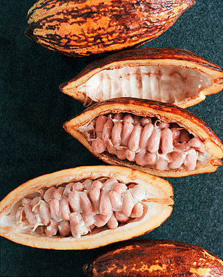 Cocoa fruits - p1629m2211335 by martinameier