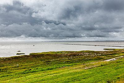 Salt marsh - p248m1064270 by BY