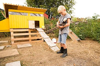 Boy holding Polish chicken at chickenhouse in garden - p300m2083656 von Michelle Fraikin