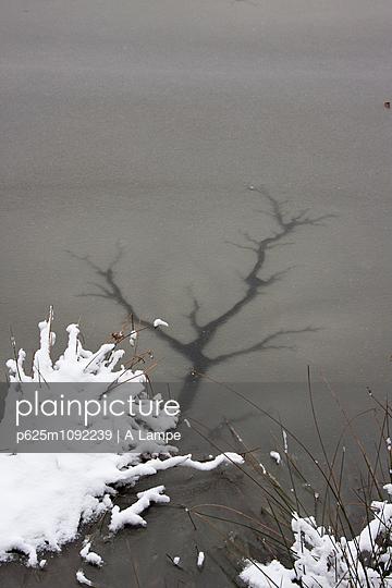Risse im Eis - p625m1092239 von A Lampe