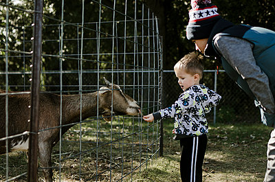 Boy looking at brother feeding goat - p1166m1211583 by Cavan Images
