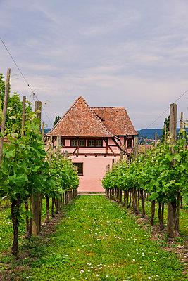 Rebhaus im Weinberg - p248m912722 von BY